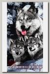 Полотенце волки