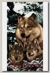 Полотенце Волки в зимнем лесу